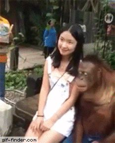 This monkey is a real gentleman   Gif Finder – Find and Share funny animated gifs