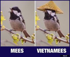 Mees en Vietnamees | - #en #Mees #vietnamees Punny Puns, Tears In Eyes, Funny Marvel Memes, Cool Pets, Sarcastic Humor, Animal Memes, Funny Moments, Cringe, Animals And Pets