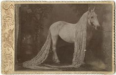 SIDESHOW PITCH CARDS | Horse of the Night Circus.