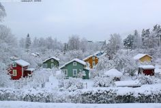 Allotments During Wintertime