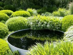 Metal reflecting bowl amongst clumps of Japanese forest grass and box ball topiary