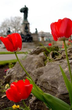 shawky-photographs:  Poppies and Statues on Flickr