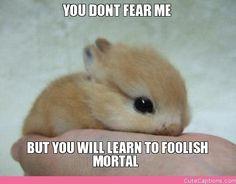 Foolish Mortal | Cute Captions