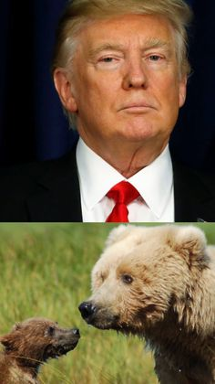 Heartbreaking News: Trump Legalizes Killing Hibernating Wolves, Bears And Their Cubs & Pups In Alaska