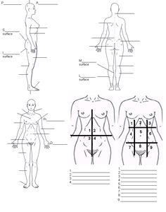 1000 images about anatomy and physiology on pinterest. Black Bedroom Furniture Sets. Home Design Ideas