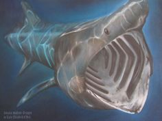 My latest oil painting.  A basking shark still life canvas, oils only.  Realism.  Very blue. Underwater, sea, ocean, animal, fish, marine, gills, mouth, aquatic, realism, nautical, freehand, original.