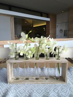 Orchids in test tube
