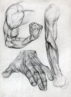 Exceptional Drawing The Human Figure Ideas. Staggering Drawing The Human Figure Ideas. Human Figure Drawing, Figure Drawing Reference, Anatomy Reference, Life Drawing, Arm Drawing, Human Body Drawing, Hand Reference, Design Reference, Arm Anatomy