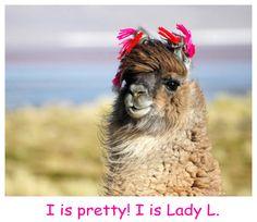 Pretty Lama Princess