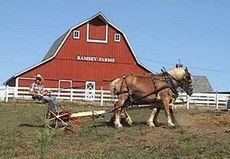 The Ramsey Farm at Lesanville is a 180-acre historic working farm and village depicting the life and culture of rural America between the l