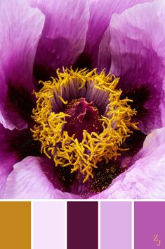 ZJ Colour Palette 167 #colourpalette #colourinspiration Soothing Paint Colors, Color Combinations, Color Schemes, Wax Studio, Paint Color Chart, Color Harmony, Interior Paint Colors, Colour Board, World Of Color
