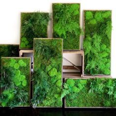 What is an Artisan Moss Plant Painting®? Real plants, preserved and framed to create beautiful plant art for your home or office! Indoor Garden, Indoor Plants, Indoor Outdoor, Vertical Farming, Vertical Gardens, Art Mural Vert, Island Moos, Moss Wall Art, Moss Plant