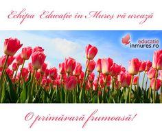 O primăvară frumoasă!