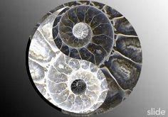 Nautilus shell yin-yang? yes please :)