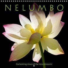N E L U M B O - Enchanting views of the lotus blossom - CALVENDO calendar by Thomas Herzog - http://www.calvendo.de/galerie/n-e-l-u-m-b-o-enchanting-views-of-the-lotus-blossom/?s=nelumbo&pcat=0&cat=0&