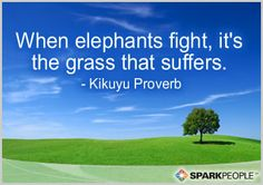 When elephants fight, it's the grass that suffers.