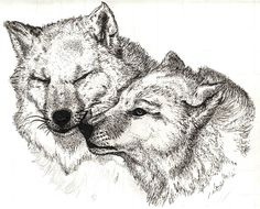 Wolves drawn by pens