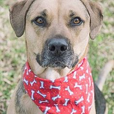 Pictures of Timber a Shepherd (Unknown Type) for adoption in San Leon, TX who needs a loving home.