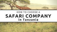 How to Choose a Safari Company in Tanzania Tanzania Safari, African Safari, Feeling Overwhelmed, Africa Travel, How Are You Feeling, Adventure, How To Plan, World, Google Search