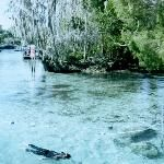 Three Sisters Springs, Crystal River, Florida Citrus County Florida, Crystal River Florida, Homosassa Springs, Florida Springs, Lets Run Away, Pine Ridge, Manatees, Three Sisters, Tour Tickets