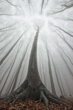 Magic of the forest. Atmospheric photos from the forests of Transylvania by PhotoCosma
