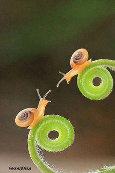 """seasonalwonderment: """" Snails on Tendrils """""""