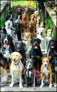 DOG TRIP ........ #by Sandra Arrieta --- http://plus.google.com/u/0/