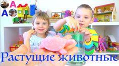 Растущие МОРСКИЕ ЖИВОТНЫЕ Выращиваем  Видео для Детей
