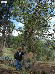 Acabo de compartir la foto de Rixser Ramirez Peña que representa a: Frutal - Huancabamba