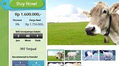 Groupon menghadirkan penawaran hewan kurban domba dan sapi secara online. Penawaran ini dilakukan dalam rangka menyambut Iduladha 2014. Selengkapnya on-msn.com/1tcmXeQ