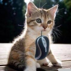 I got the mouse