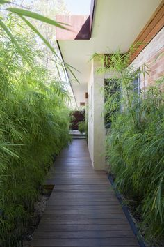 Adorable 52 Wonderful Indoor Courtyard Gardens Design Ideas That Looks So Awesome Indoor Courtyard, Modern Courtyard, Courtyard Design, Garden Design, Courtyard Gardens, Palm Trees Landscaping, Front Yard Landscaping, Outdoor Gardens, Indoor Outdoor