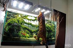 Domingo é dia de curtir o aqua! © @hamsaquarium #cat #instacat #meow #nature #natureaqua #naturelover#naturelovers #natureza #acquario #aquario #aquariofilia #aquarium #aquarismo #aquatic #fishtank #freshwater #アクアリウム #plant
