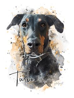 """PART Watercolor Puppy Tutorial (Tips & Tricks for painting Fur) - Doberman """" Doberman The Effective Pictures We Offer You About trends ideas A quality picture can - Dog Portraits, Portrait Art, Animal Paintings, Animal Drawings, Dog Drawings, Doberman Dogs, Husky Dog, Doberman Pinscher, Painting Fur"""