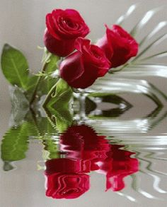 Animations, Animation, Animated Graphics, Keefers gif by Keefers_ Text Pictures, Flower Pictures, Emoji Pictures, Beautiful Gif, Beautiful Roses, Beautiful Babies, Rose Color Meanings, Good Morning Flowers, Water Reflections