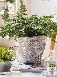 #TIPP: Blumentöpfe mit Zeitungspapier umwickeln. Sieht cool aus und zaubert schnell einen ganz individuellen #Eyecatcher. Plants, Green And Brown, Wrap Around, Succulents, Projects, Deco, Plant, Planets