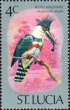 St Lucia 1976 Birds SG 417 Fine Used SG 417 Scott 389 Other Commonwealth stamps here