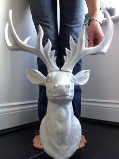 New LARGE Stag Heads in stock... Www.pinkparrotsco.co.uk