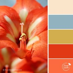 Red Lily colour palette by Brand Smoothie