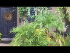 Come tour this beautiful Atlanta-inspired garden in Phoenix. Through soil-building and a big imagination, this gardener created an oasis on a budget. Cucumber Recipes, Cucumber Salad, Armenian Cucumber Recipe, Fig Leaf Tea, Make Mozzarella Cheese, Fig Leaves, Homemade Cheese, How To Make Cheese, Goat Milk