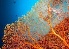 Die Sango Koralle – Jungbrunnen aus dem Meer