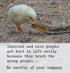Positive Quotes : QUOTATION – Image : Quotes Of the day – Description Be careful of your company. Sharing is Power – Don't forget to share this quote ! Quotes About New Year, Year Quotes, True Quotes, Motivational Quotes, Inspirational Quotes, Maya Quotes, Funny Girl Quotes, Motivational Thoughts, Happy Quotes