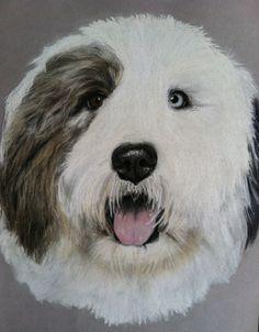 Pet portrait Original Dog drawing in pastel pencil or colored pencil Custom Dog painting Old English Sheepdog Pet lover art Pet Sympathy