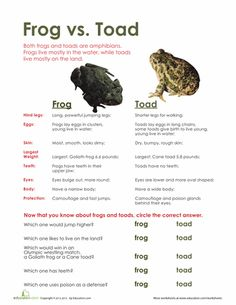 Worksheets: Frog vs. Toad