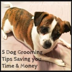 Whirlwind of Surprises: 5 #Dog #Grooming #Tips Saving you Time & Money #CHIforDogs #ad #pets #dogs @CHIHairCare @PetSmart @Fetch4Pets