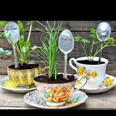 Herb teacup planter