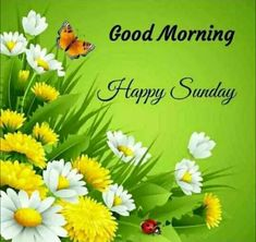 Good Morning Images Download Hd Happy Sunday Hd Images, Good Morning Sunday Images, Good Morning Beautiful Pictures, Good Morning Images Flowers, Good Morning Image Quotes, Happy Sunday Quotes, Good Morning Images Download, Sunday Gif, Morning Flowers