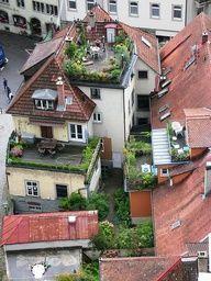 Roof-top gardens
