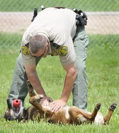 After 13 years, Woodbury County sheriff's canine goes off duty