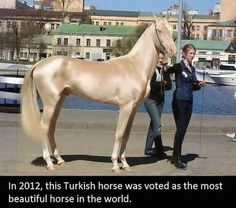 MAN Intalnire de cai